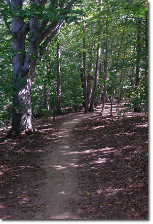 Clayton Park trail