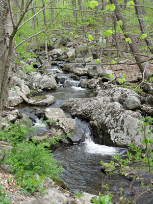 Hollow Brook runs through the Teetertown Ravine, a few minute's hike down from the campsites