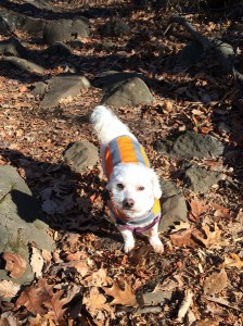 "Take it from faithful companion Gumbo:  ""Be safe, wear orange during hunting season.  I do."""