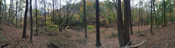 Fiddler's Creek Ravine